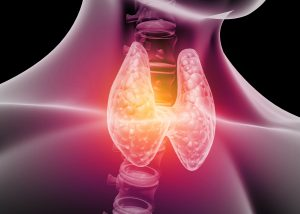 The Anatomy of the Thyroid – Labs and Symptoms
